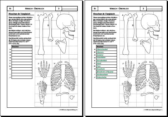 Arbeitsblatt Zelle Biologie : Biologie arbeitsblatt knochen Übungen