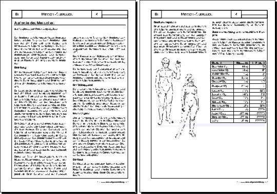 Biologie | Arbeitsblatt Anatomie | 8500 Übungen, Arbeitsblätter ...