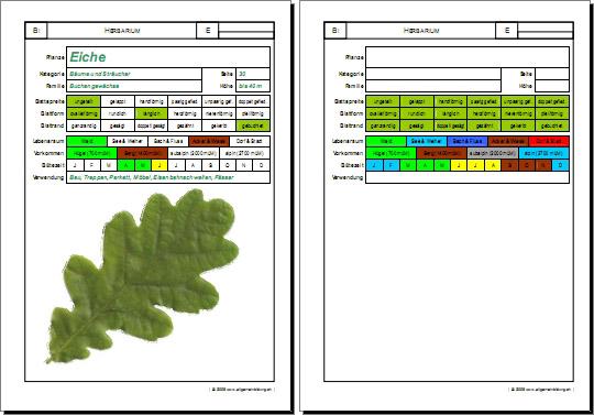 biologie arbeitsblatt pflanzen tiere herbarium 5000 bungen arbeitsbl tter r tsel quiz. Black Bedroom Furniture Sets. Home Design Ideas