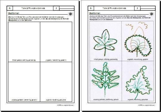 biologie arbeitsblatt pflanzen blattformen erkennen bestimmen 8500 bungen arbeitsbl tter. Black Bedroom Furniture Sets. Home Design Ideas