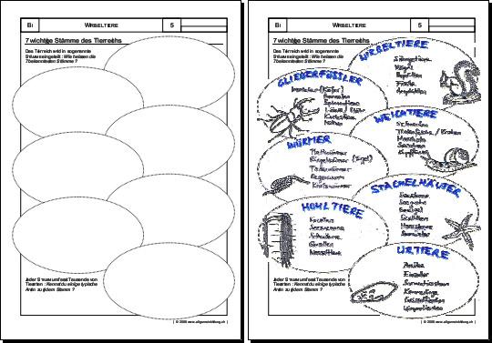 biologie arbeitsblatt st mme des tierreichs 5000 bungen arbeitsbl tter r tsel quiz. Black Bedroom Furniture Sets. Home Design Ideas