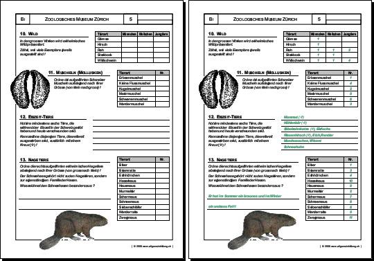 Biologie | Arbeitsblatt Wild Nagetiere | 8500 Übungen ...