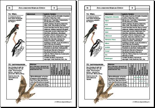 Biologie | Arbeitsblatt Vögel | 8500 Übungen, Arbeitsblätter, Rätsel ...