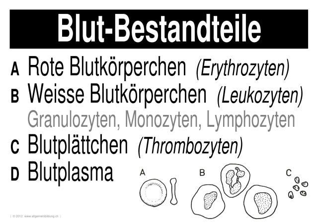 Biologie | LernPlakate Wissensposter Blut-Bestandteile | 8500 ...