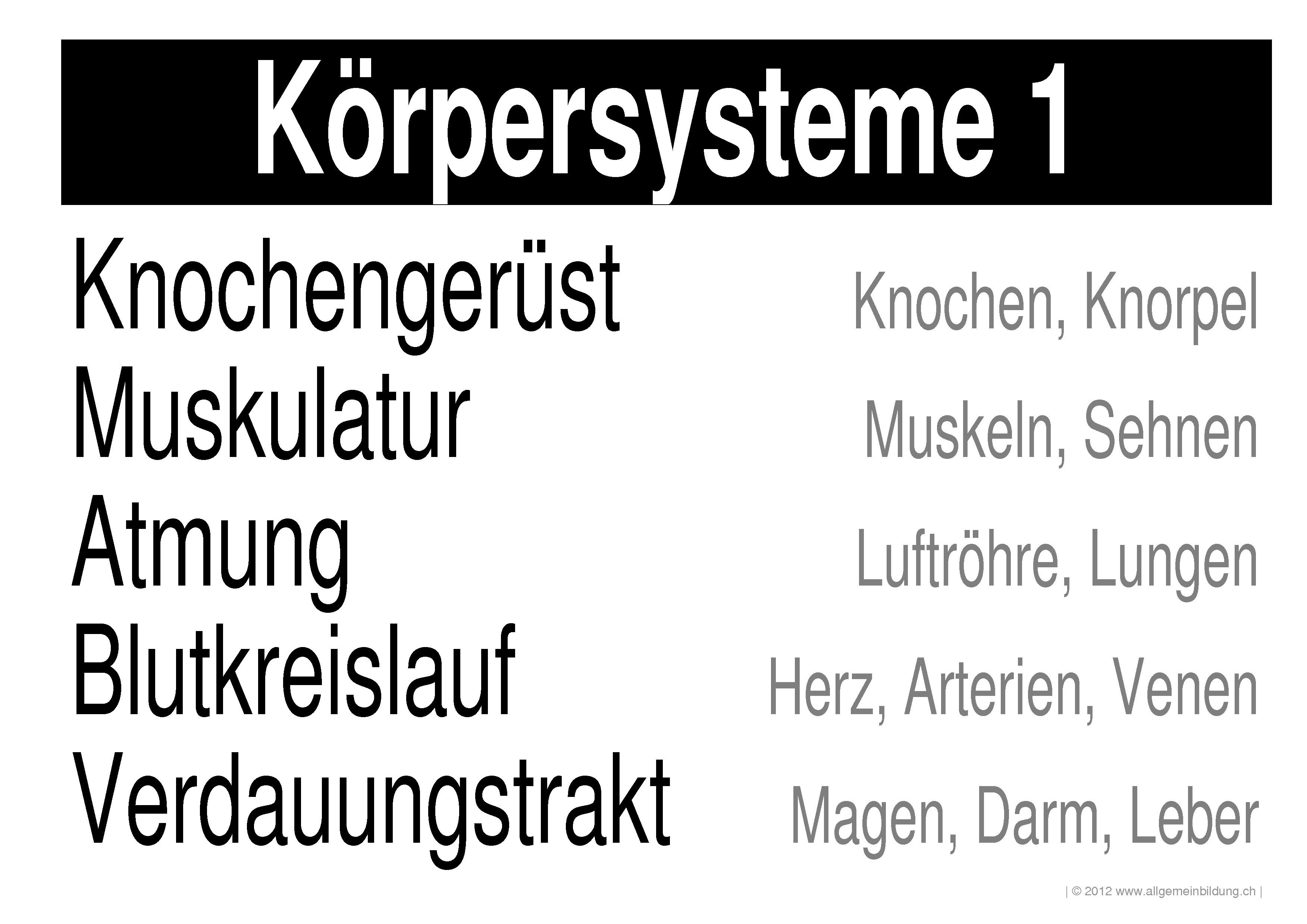 Niedlich Körper Systeme Zeitgenössisch - Menschliche Anatomie Bilder ...