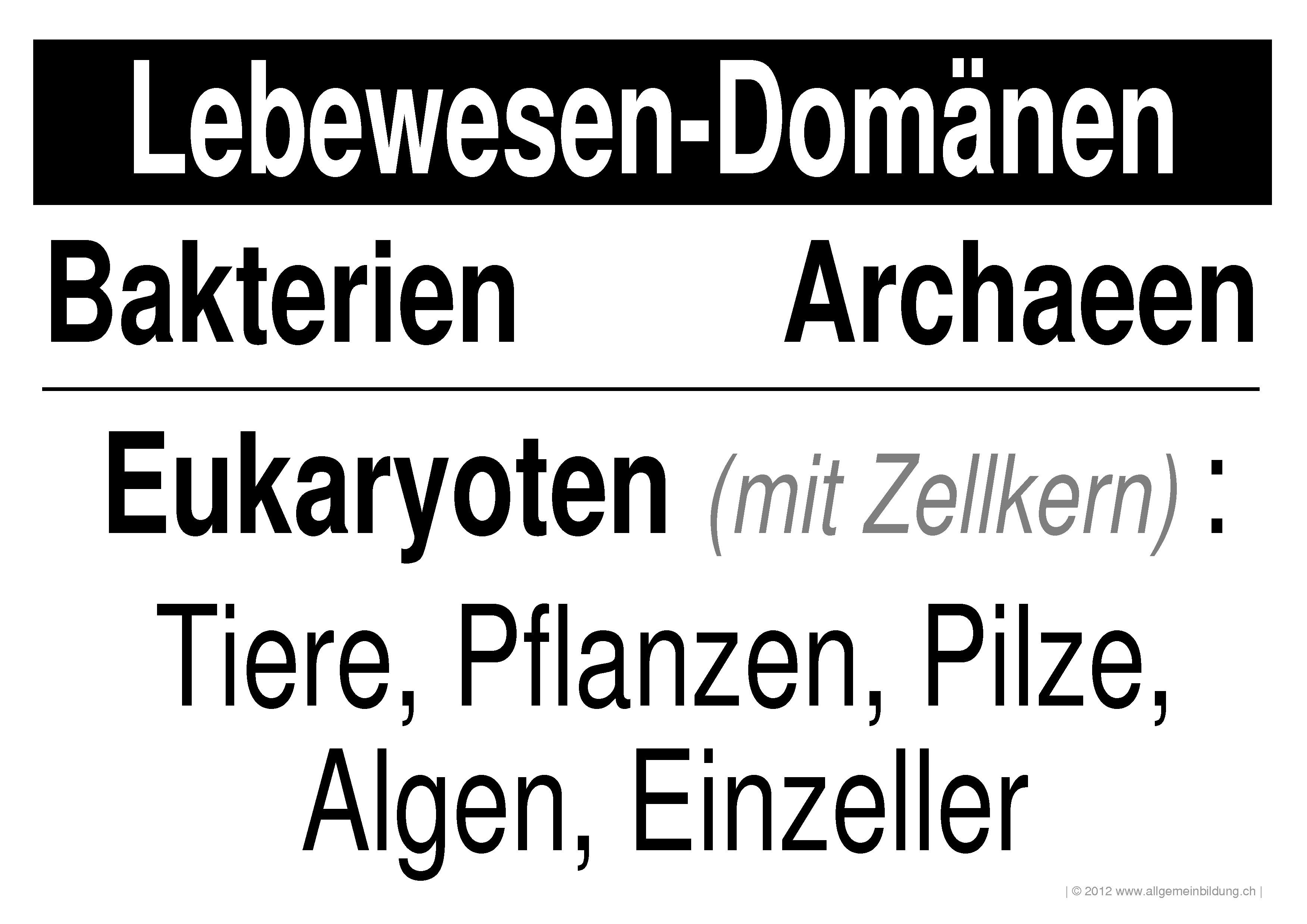 Nett Bakterien Arbeitsblatt Fotos - Super Lehrer Arbeitsblätter ...