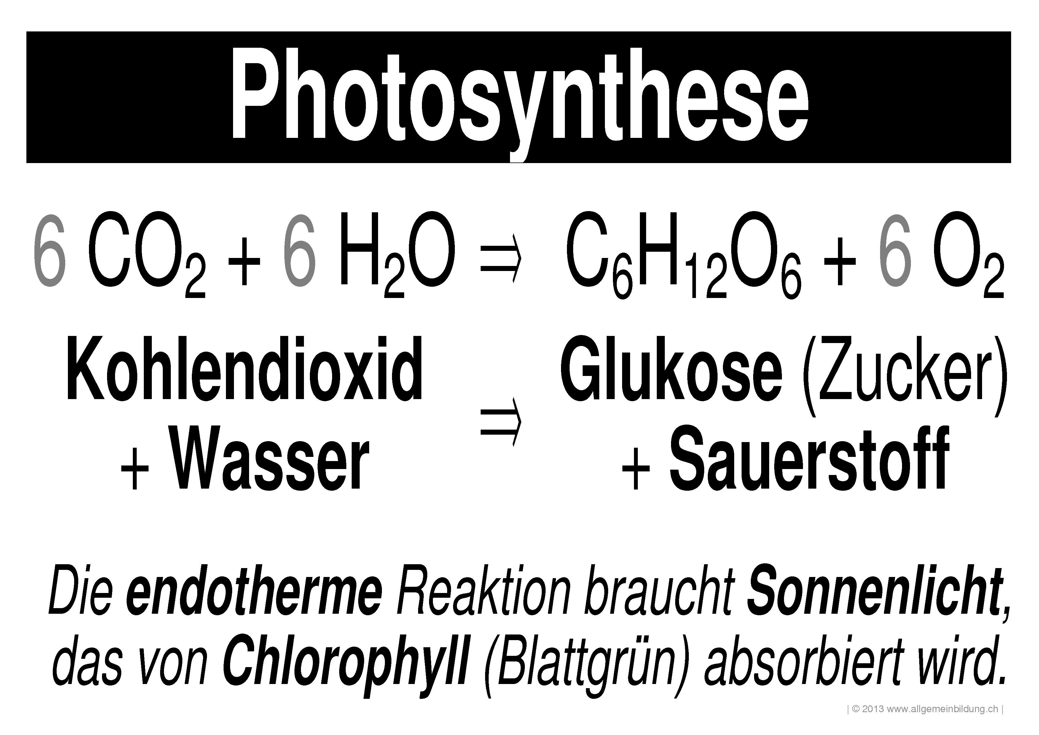 Biologie | LernPlakate Wissensposter Stoffkreislauf Photosynthese ...