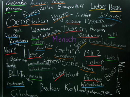 Biologie | Tafelbilder Mensch Organe Brainstorming | 5000 Übungen ...