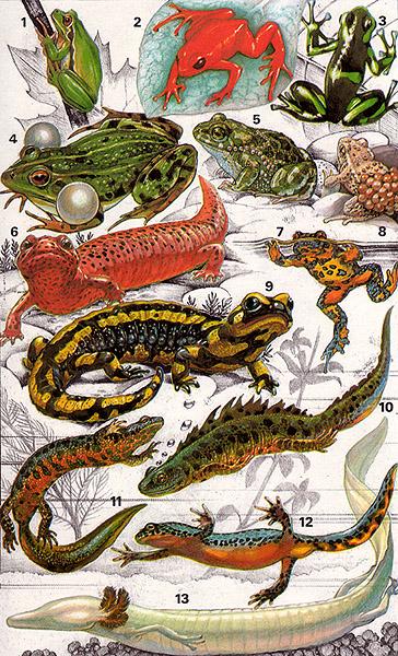 Biologie | Amphibien : 01a | lernen & üben | Online-Übungen ...
