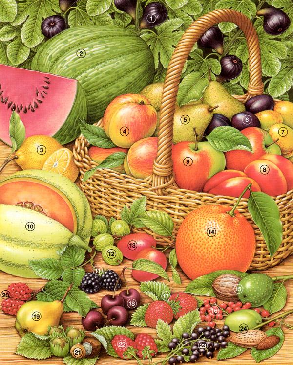Biologie | Früchtekorb : 01a | lernen & üben | Online-Übungen ...