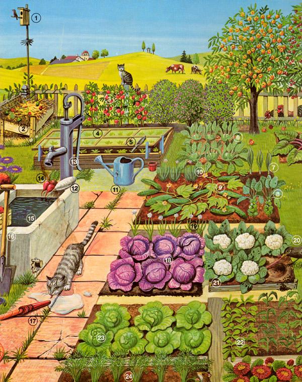 Gemüsegarten kalender  Beton + Garten: Pflanzen erkennen