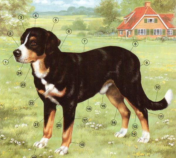 Biologie | Hund (Anatomie) : 01a | lernen & üben | Online-Übungen ...