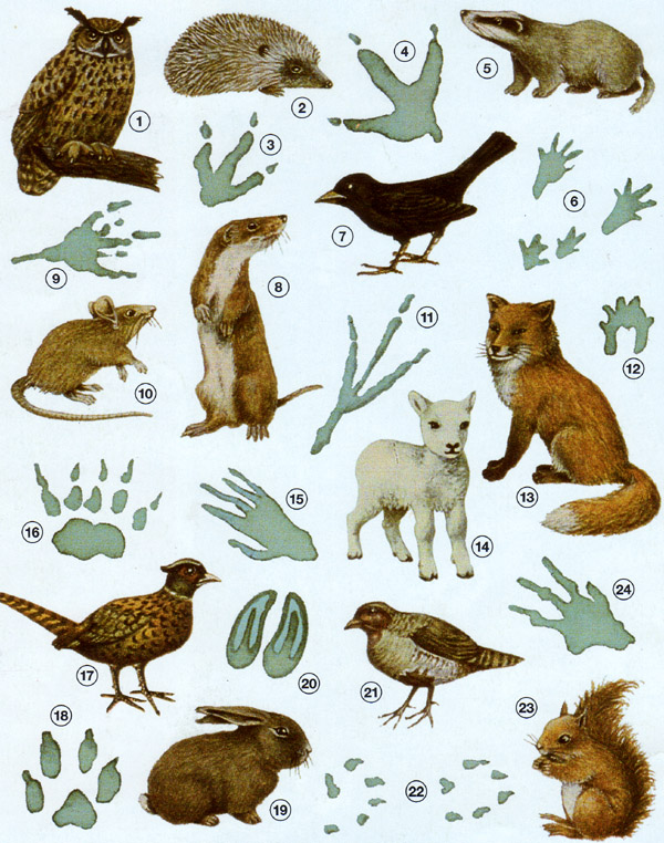 Biologie | Tierspuren : 03a | lernen & üben | Online-Übungen ...