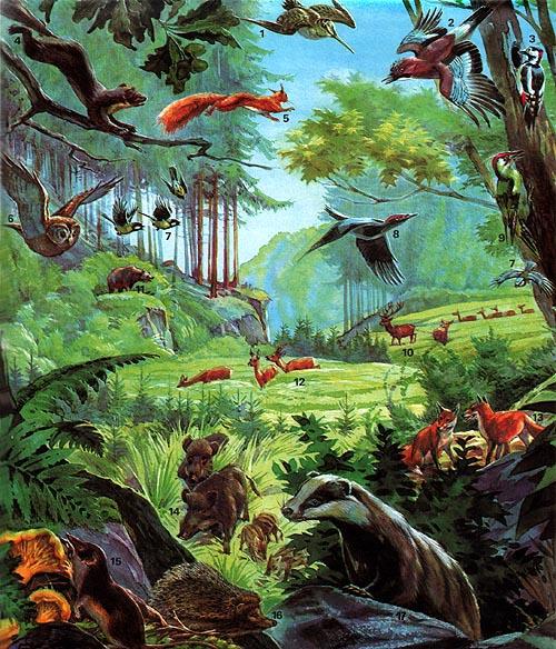 Biologie : Waldtiere : 02e : lernen u0026 u00fcben : Online ...