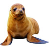 seal | phoque